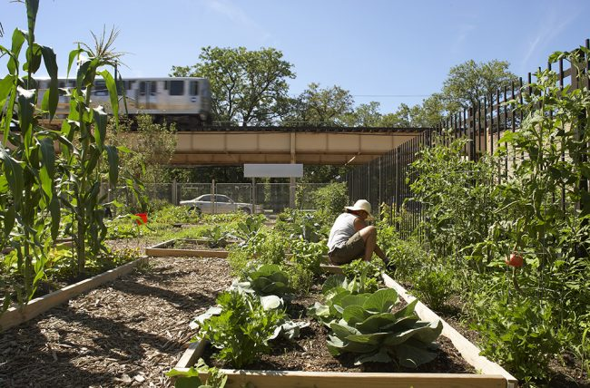 Inspiration Kitchens Vegetable Garden